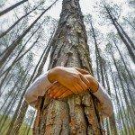 Abraza un árbol – La energía de los árboles