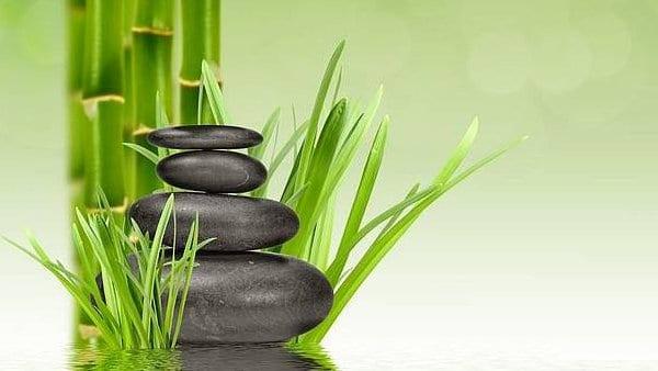 Lucky Bamboo — Plantas Mágicas — Bambú de la buena suerte