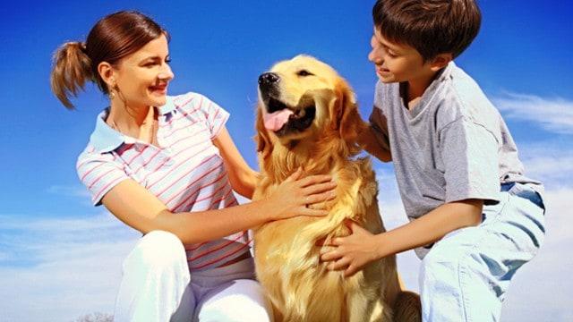 ¿Por qué los perros viven menos?