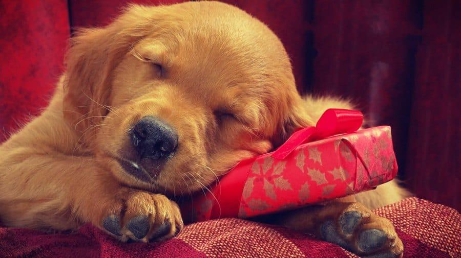Navidad Perruna — Ideas para involucrar a tu perro en Navidad
