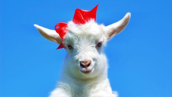 Factor X — Clave de éxito en el Año de la Cabra