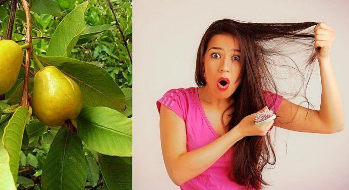 Hoja de guayaba para detener la caída de cabello