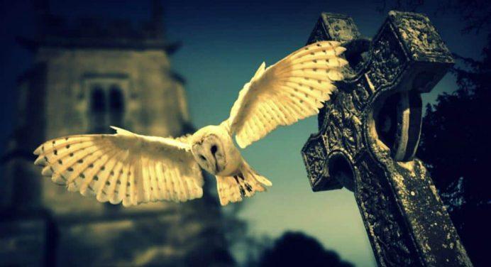 Supersticiones sobre las Aves