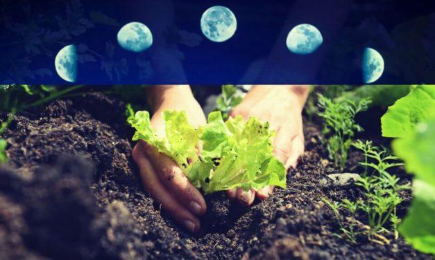 Influencia de la Luna en los cultivos de hortalizas, cereales y frutales