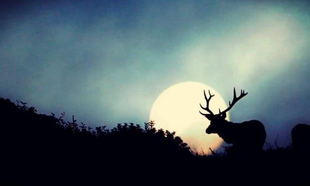 Luna Bendita — La Luna Llena de Julio