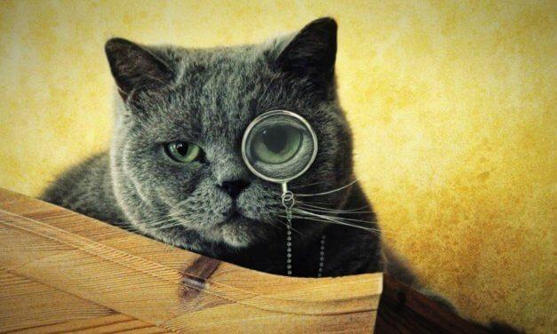 Las increíbles predicciones que podemos descubrir al mirar a los gatos