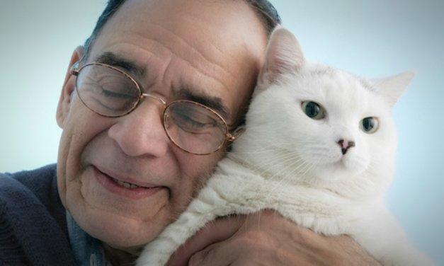 Los gatos y su escudo de protección contra energías negativas
