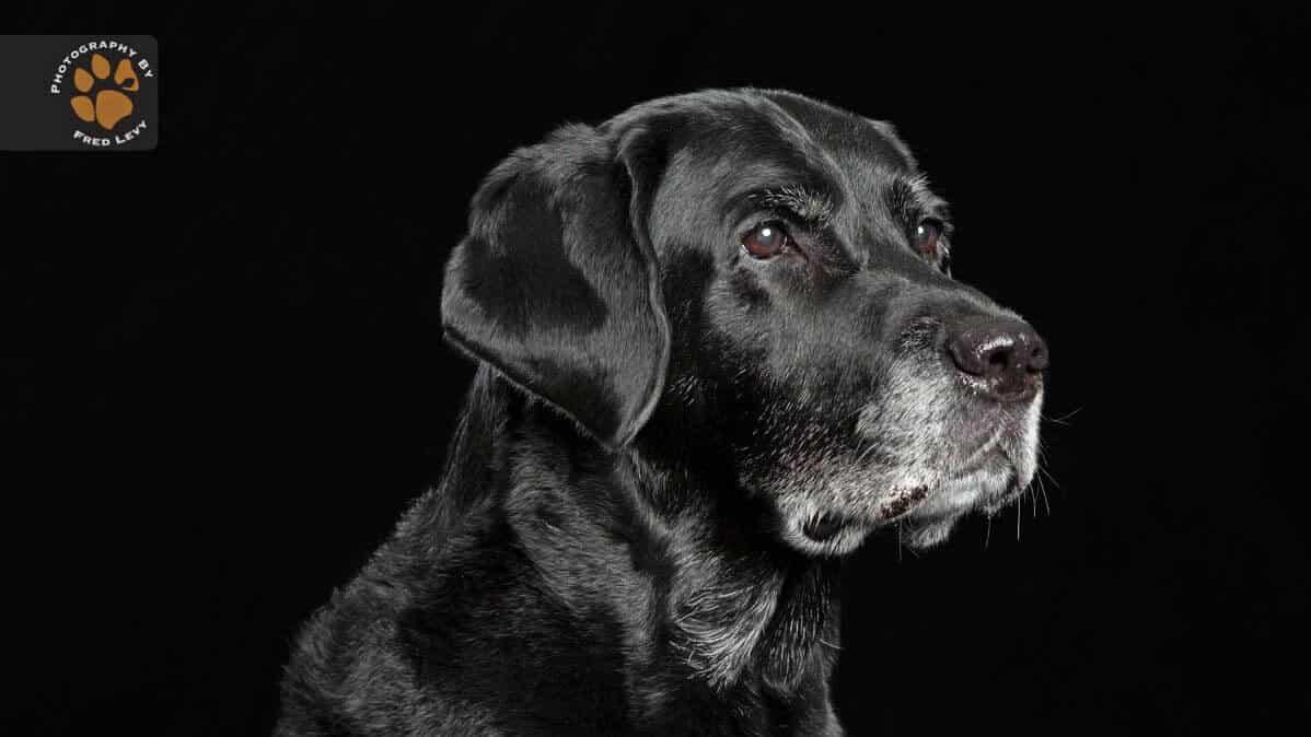 Síndrome del Perro Negro – Algunas ideas absurdas sobre perros negros