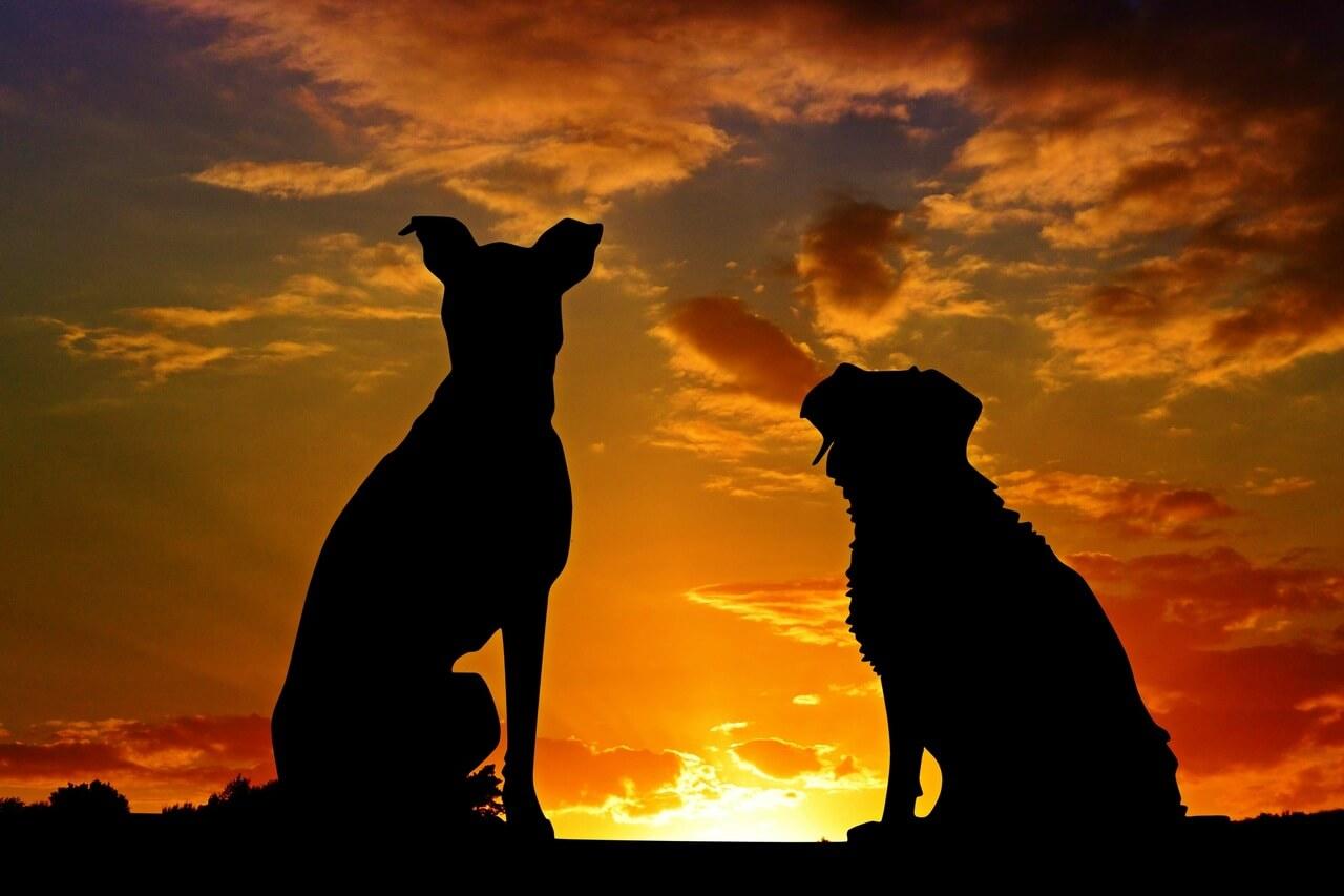 El simbolismo de los perros en el arte cristiano